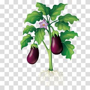 terong, Taman Tanaman, menanam terong png