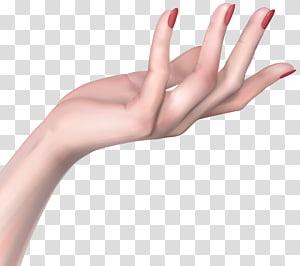 telapak tangan orang kanan, Ikon Wanita Tangan, Tangan Wanita PNG clipart