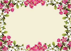 bunga merah dan putih, Bunga Mawar Merah Muda, Bingkai Bunga png