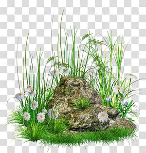 Batu, Batu dengan Rumput dan Bunga, batu dikelilingi oleh bunga putih png