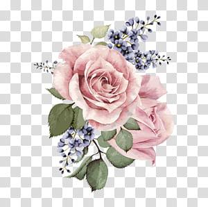 Centifolia roses Mawar taman Desain bunga Bunga Cut Pink, Bunga cat air yang dilukis dengan tangan, ilustrasi bunga mawar merah muda png