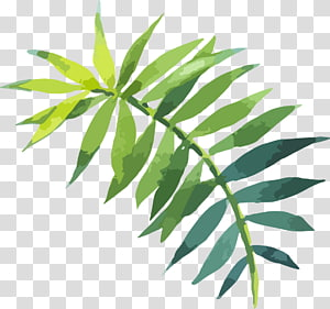 ilustrasi daun pakis hijau, lukisan Cat Air Daun, Cat hijau daun tangan dicat PNG clipart