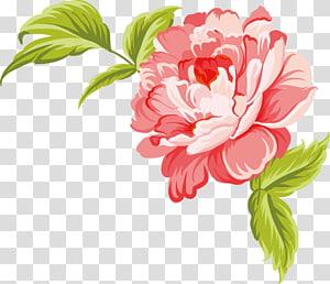 Cat Air Lukisan Cat Air Kreatif, Bunga cat air kreatif, peony putih dan merah muda png
