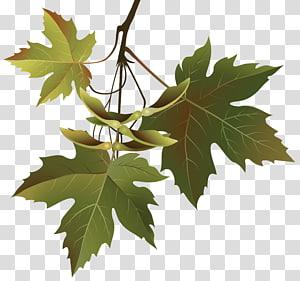 ilustrasi daun maple hijau, Pohon Cabang Daun, Cabang Daun Musim Gugur PNG clipart