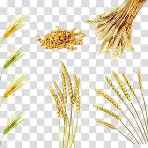 ilustrasi gandum, minyak dedak beras Sereal Gandum Beras merah, Berbagai gandum png
