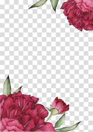 Centifolia roses Menggambar Bunga, Efek mawar merah dicat, close-up bunga merah muda PNG clipart