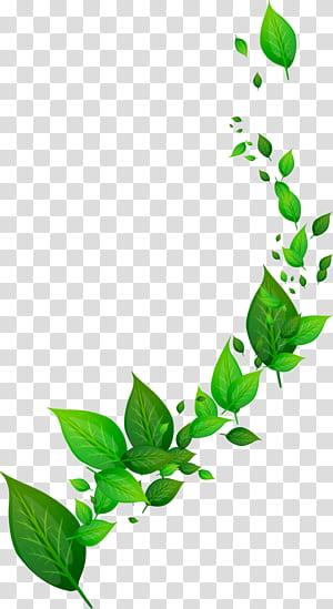 Daun dinamis, ilustrasi berdaun hijau png