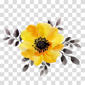 Ilustrasi Bunga Kuning Lukisan cat air, Bunga kuning, close-up magnolia kuning PNG clipart