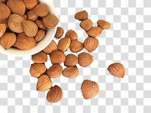 kacang almond di dalam dan di samping mangkuk, Hazelnut, almond renyah png