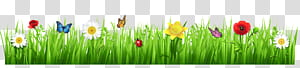 Tulip Meadow Grasses Wildflower, Spring Grass with Flowers, ilustrasi daisy putih png
