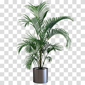 Houseplant Pot Bunga Pohon Berkebun, tanaman pot tanaman Indoor, tanaman berdaun hijau pada pot logam png