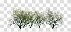 Cabang batang tanaman ranting semak, menanam cabang semak kecil png