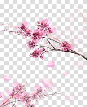 Kertas Bunga Sakura, Bunga persik merah muda, bunga pink PNG clipart