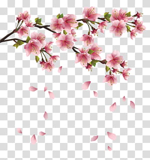Kelopak, Cabang Musim Semi Merah Muda Cantik dengan Falling Petals, ilustrasi bunga sakura merah muda b png