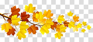 Branch Autumn Tree, Branch with Autumn Leaves, cabang maple kuning dan coklat png