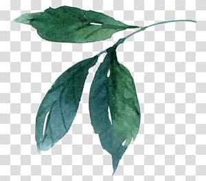 lukisan daun hijau, lukisan Cat Air Daun, daun Cat Air png