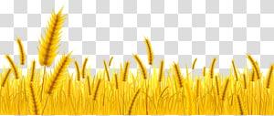 wheatgrass, Petani Gandum, panen Gandum png