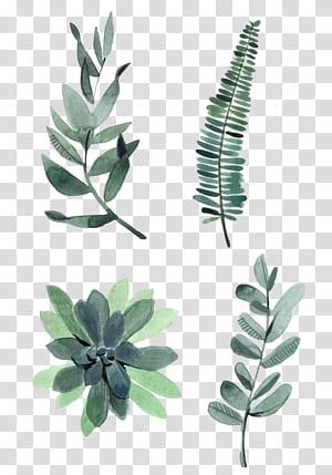 Lukisan Cat Air Gambar Tanaman Ilustrasi, daun Cat Air, empat macam daun hijau png
