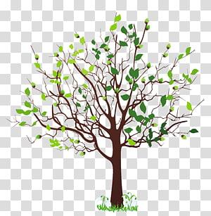 Spring Tree, Spring Tree dengan Snowdrops, ilustrasi pohon berdaun hijau png