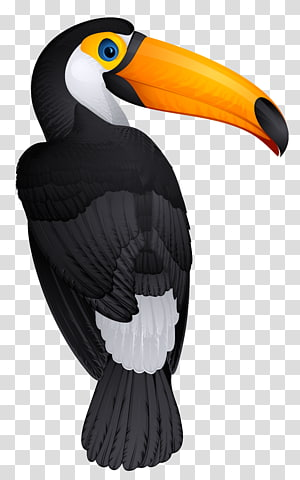 burung toucan, Bird Toucan Hornbill, Toucan Bird PNG clipart