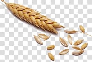 gandum gandum, Gandum Sereal Malt Gandum utuh, Penuh gandum png