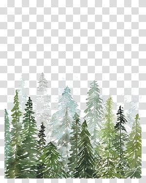 Lukisan cat air Seni Cetak Gambar, Kayu cat air, lukisan pohon pinus png