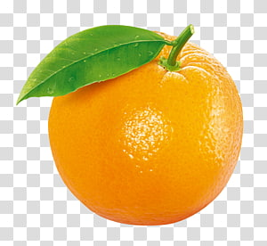 buah jeruk, Buah Jeruk Tangerine Clementine, buah Jeruk png