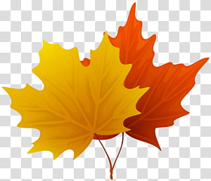 dua daun maple kuning dan merah, Leaf, Fall Maple Leaves Decorative PNG clipart