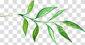 ilustrasi tanaman daun hijau, Cat Air: Bunga Lukisan Cat Air Gambar, Bunga yang dilukis dengan tangan png