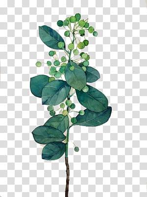 Lukisan Cat Air Daun, Daun Cat Air, lukisan tanaman hijau dan putih png