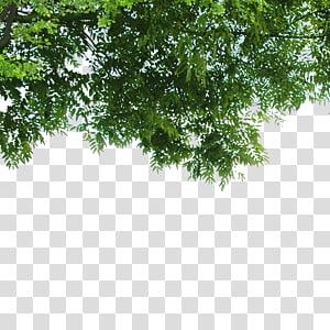 pohon hijau, Landscape Poster Alam, Daun png