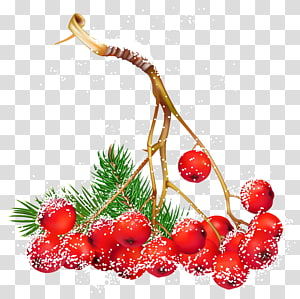 ilustrasi ceri merah, Berry Natal holly Biasa, Christmas Snowy Holly Berries PNG clipart