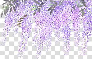 Bunga Lavender, Ungu Wisteria, Bunga wisteria lavender dicat, bunga ungu png