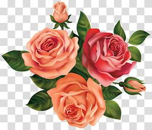 Bunga Mawar, Mawar Cantik, bunga mawar merah muda dan merah png