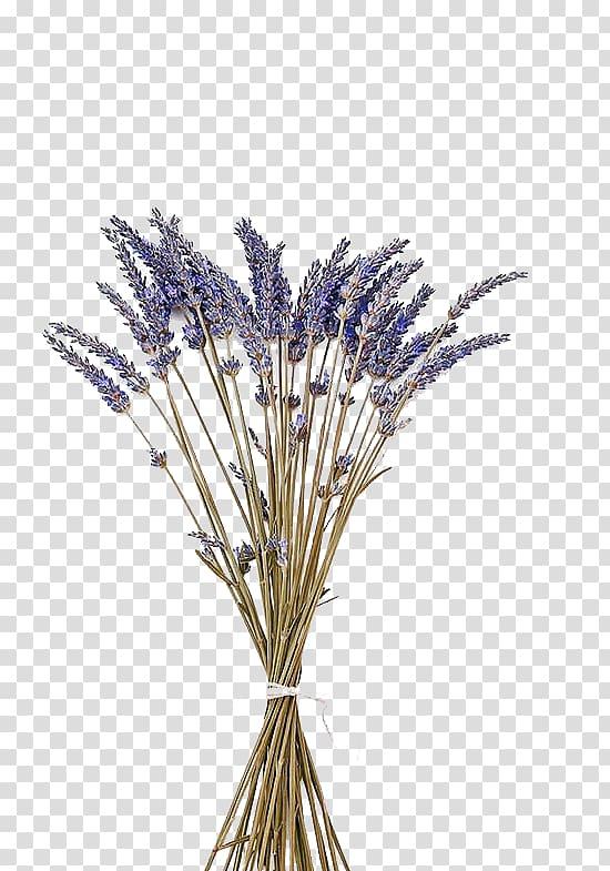 bundel bunga, minyak lavender Inggris Bunga Lavender, lavender ungu dengan bunga kering png
