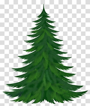 ilustrasi pohon pinus, Pohon Pinus, Pohon Pinus PNG clipart