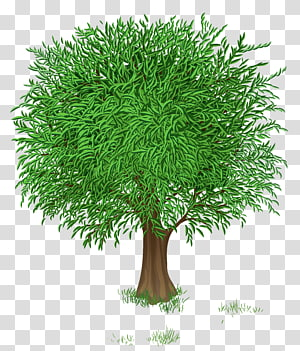 ilustrasi pohon berdaun hijau, Flower Tree Blossom, Green Tree png