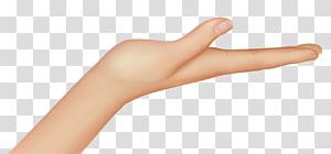 Thumb Nail Hand model Kaki manusia, Tangan, tangan manusia kanan PNG clipart