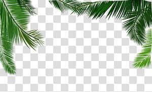 Daun santan Euclidean, bahan tekstur daun kelapa, sudut rendah daun kelapa di bawah langit yang menenangkan png