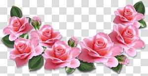 Bunga Mawar Merah Muda, Dekorasi Mawar Merah Muda, ilustrasi mawar merah muda png