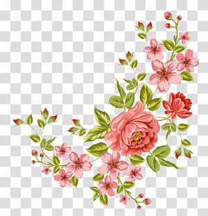 Bunga, bunga sudut, bunga merah muda png