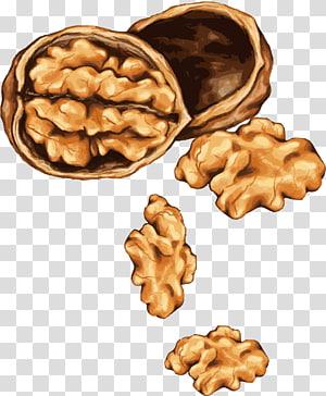 ilustrasi kenari coklat, alergi kacang pohon Gambar Almond, kenari dicat png