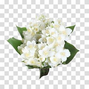 bunga putih, Bunga melati Arab, karangan bunga Melati png