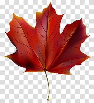 ilustrasi daun merah, warna daun Musim Gugur Merah, Daun Musim Gugur Merah Cantik PNG clipart