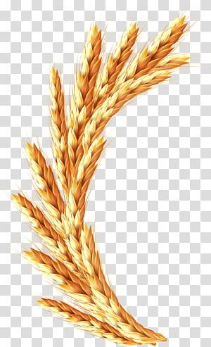 ilustrasi gandum merah,, arroz png