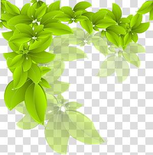 daun hijau, Cabang Daun Hijau, daun png