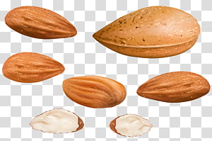 ilustrasi kacang almond, Almond Nucule, Almonds png