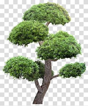 Penghijauan Lansekap Taman Pohon, Pohon Payung, Pohon Daun Hijau png