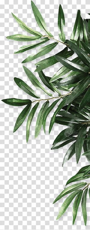 Leaf Be Natural Organics Android, daun, tanaman daun hijau png