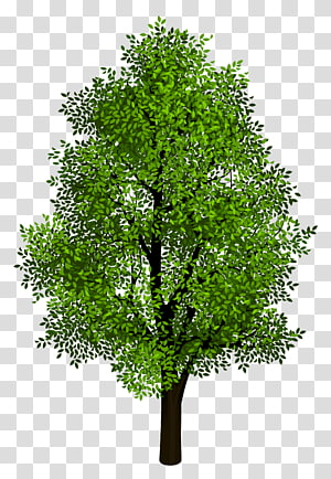 Proyeksi isometrik pohon, pohon hijau, pohon berdaun hijau png